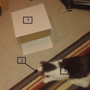 Cat, Laser pen and cardboard box