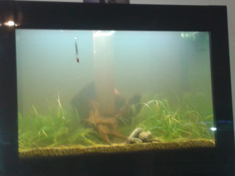Aquarium Build Take 2 Part 4